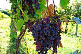 Finger Lakes Wine Region